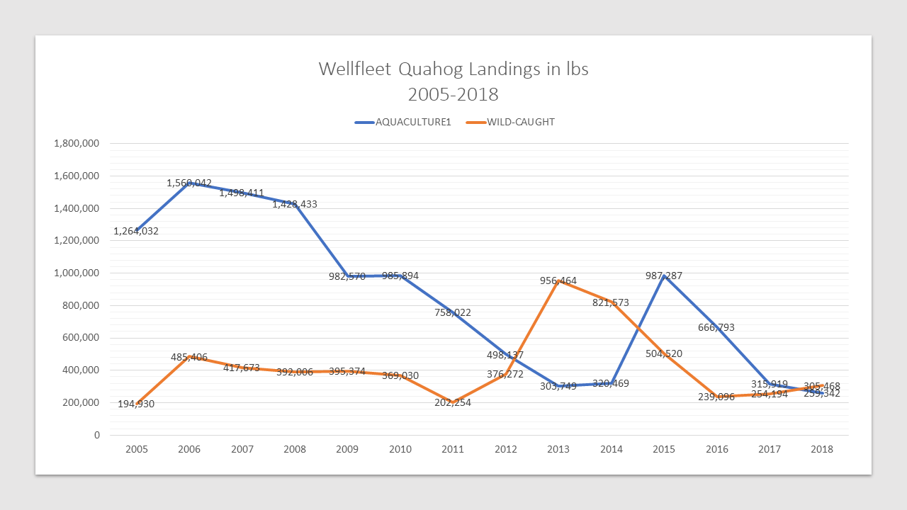 Wellfleet Quahog Landings in lbs 2005-2018